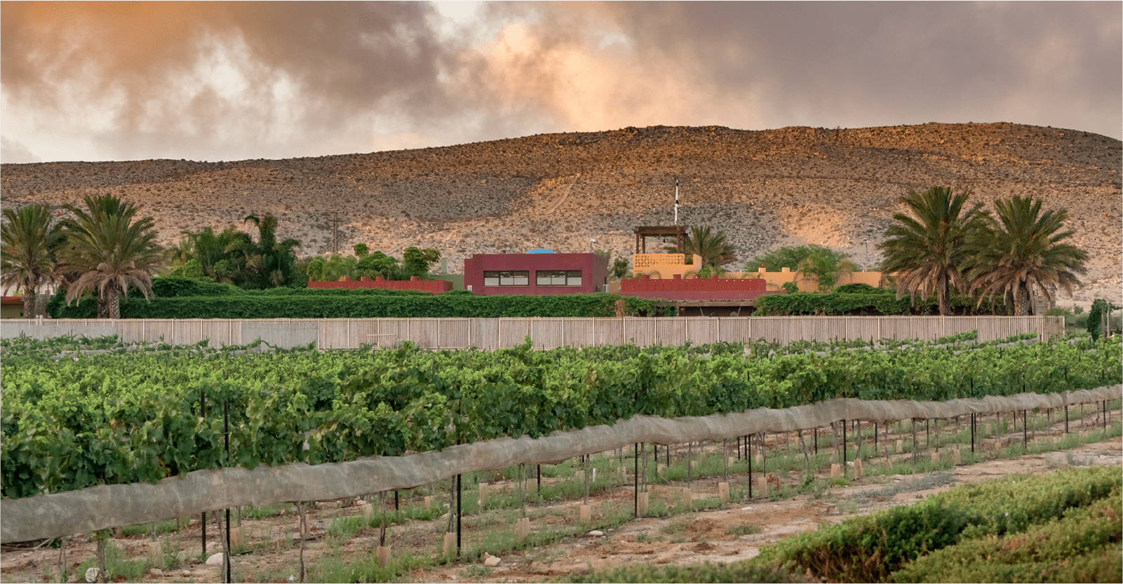 בית השנטי במדבר